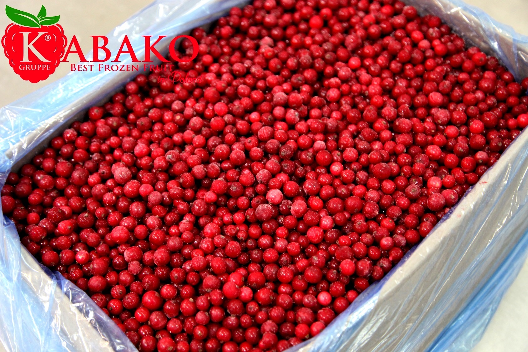 Frozen (IQF) Red Currants 10