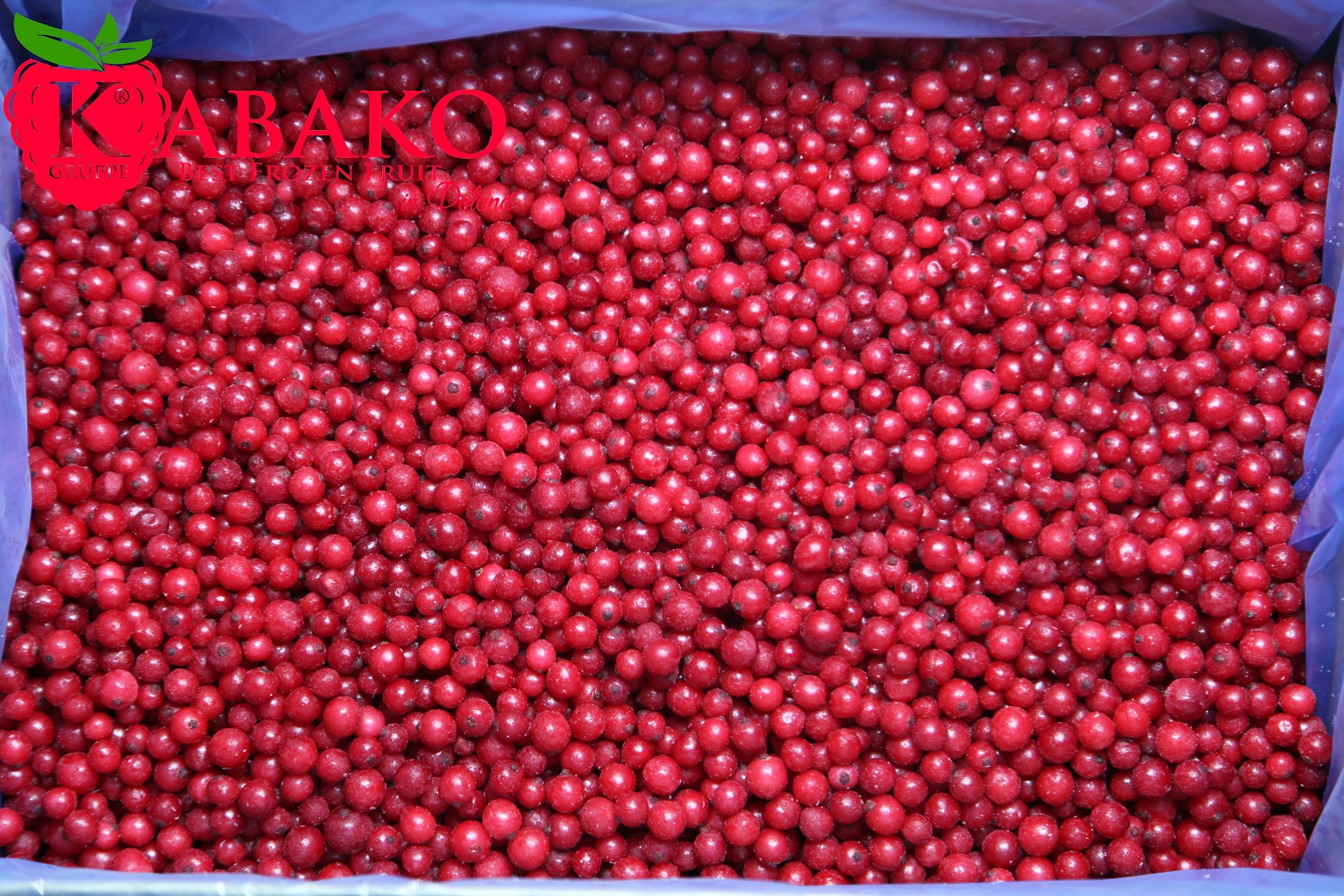 Frozen (IQF) Red Currants 12