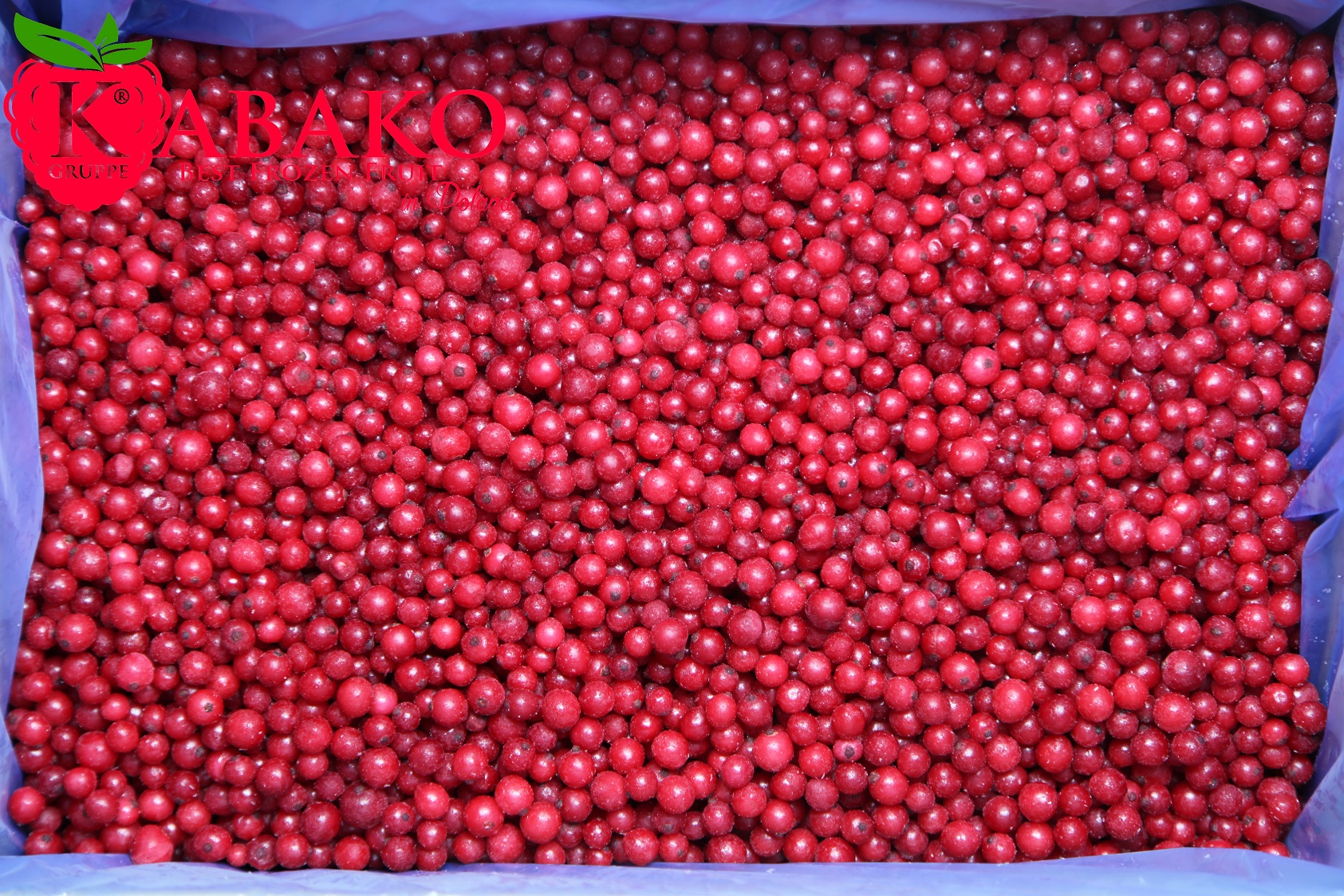 Frozen (IQF) Red Currants 7