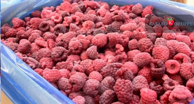 Frozen (IQF) Raspberries 21