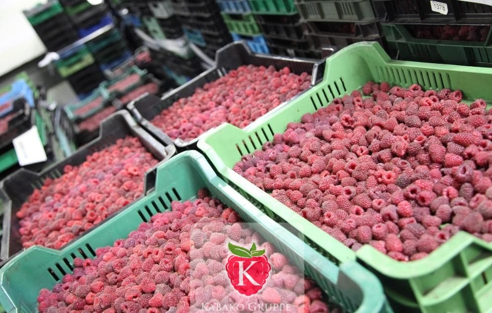 Frozen (IQF) Raspberries 5
